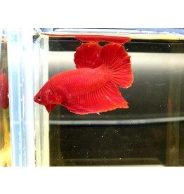 Bubba's Fishs Rode Plakat