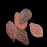 Produits naturels Catappa leaves