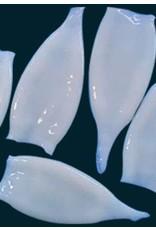 Ocean Nutrition squid - 100gr