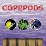 Ocean Nutrition Copepods
