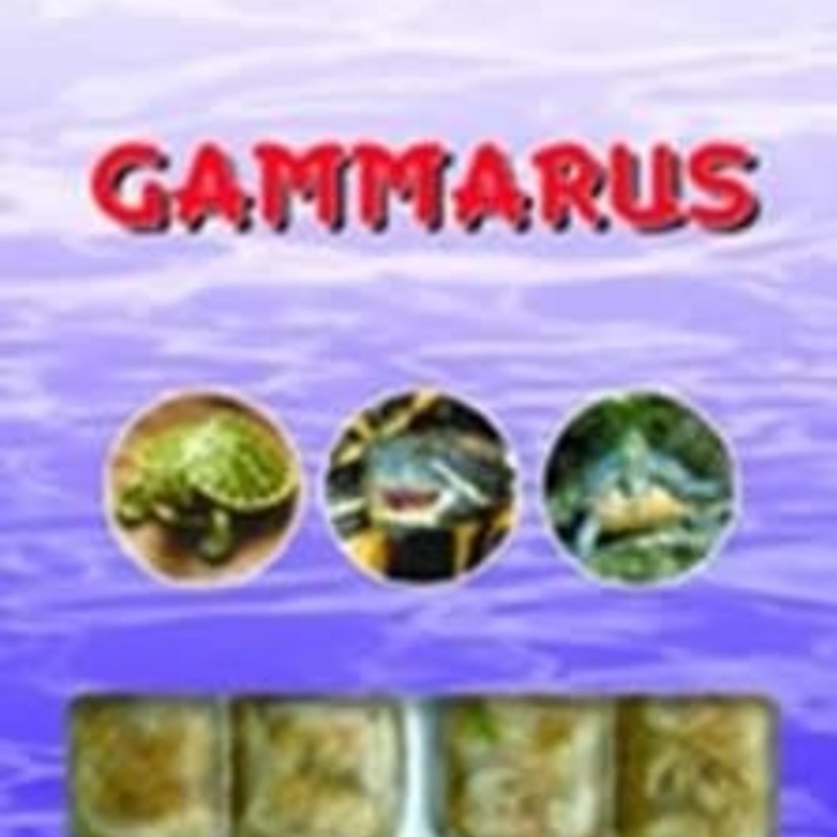 Ocean Nutrition Gammares - bevroren 100gr