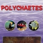 Ocean Nutrition Polychaeten