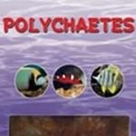Ocean Nutrition Polychaetes