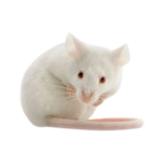 Bubba's Foods Frozen mice