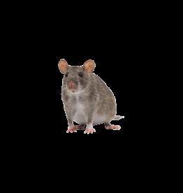Bubba's Foods Bevroren ratten