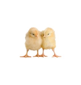 Bubba's Foods Frozen chicks
