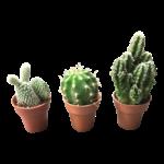NLS 3 Mini cacti