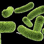 """Bacteria"""