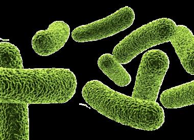 """""""Bacteriën"""""""