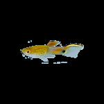 Bubba's Fishs Campoma 31