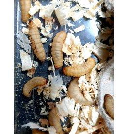 Bubba's Foods Teigne de ruche larves (+/-50p)