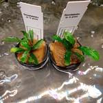 Bucephalandra sp. lo groen