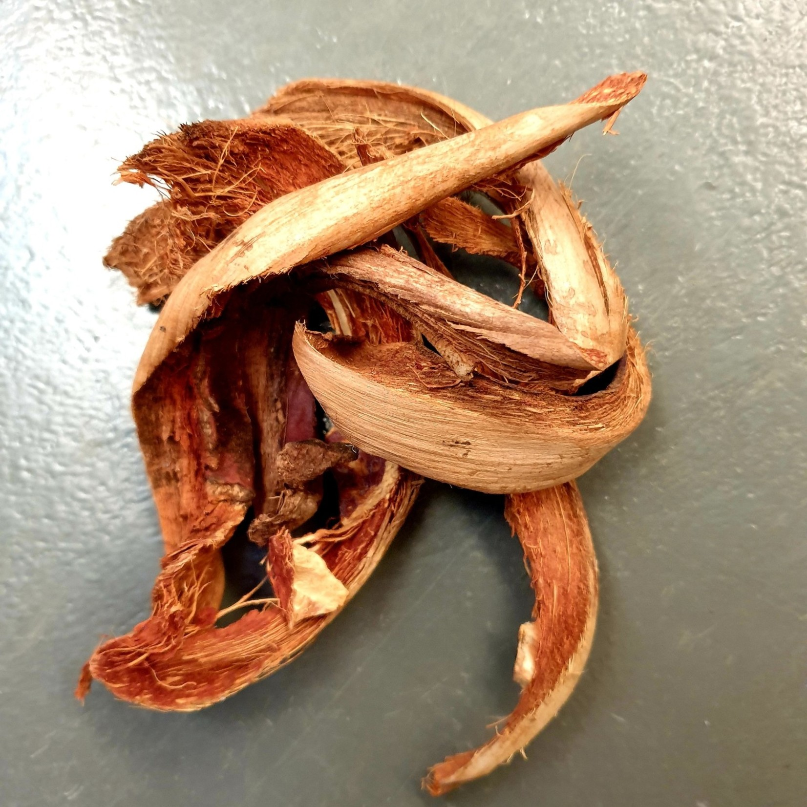 Produits naturels Kokosbast - Coconut curly (30gr)