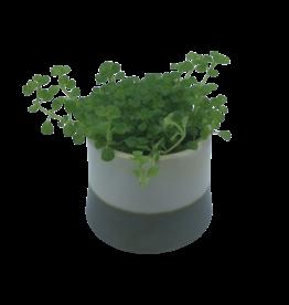 NLS Cache pot blanc vert 8x7h