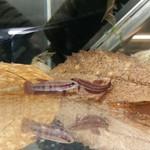 """Bubba's Fishs Hendra """"palangkaraya"""""""