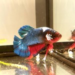 Bubba's Fishs Plakat Hellboy