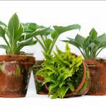 Bubba's Plants Terra cotta - Mix pot en terre cuite 24cm