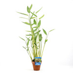 Bubba's Plants Thalia Terra cota - Terre cuite 24 cm