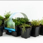 Bubba's Plants Mix oxygénantes sixpack