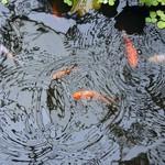 Poubellarium & Ponds