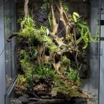 Paludarium en terrarium