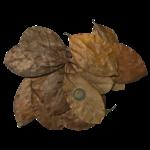 Produits naturels Jackfruit leaves