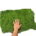 Carpets & Green walls