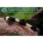 Bubba's Fishs Loche Panda - Yaoshania Pachychilius