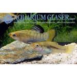 Bubba's Fishs Limia perugiae