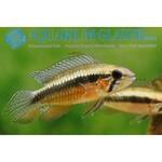 Bubba's Fishs Elizabethae