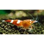 Bubba's Shrimps Rode wijn - rode robijn