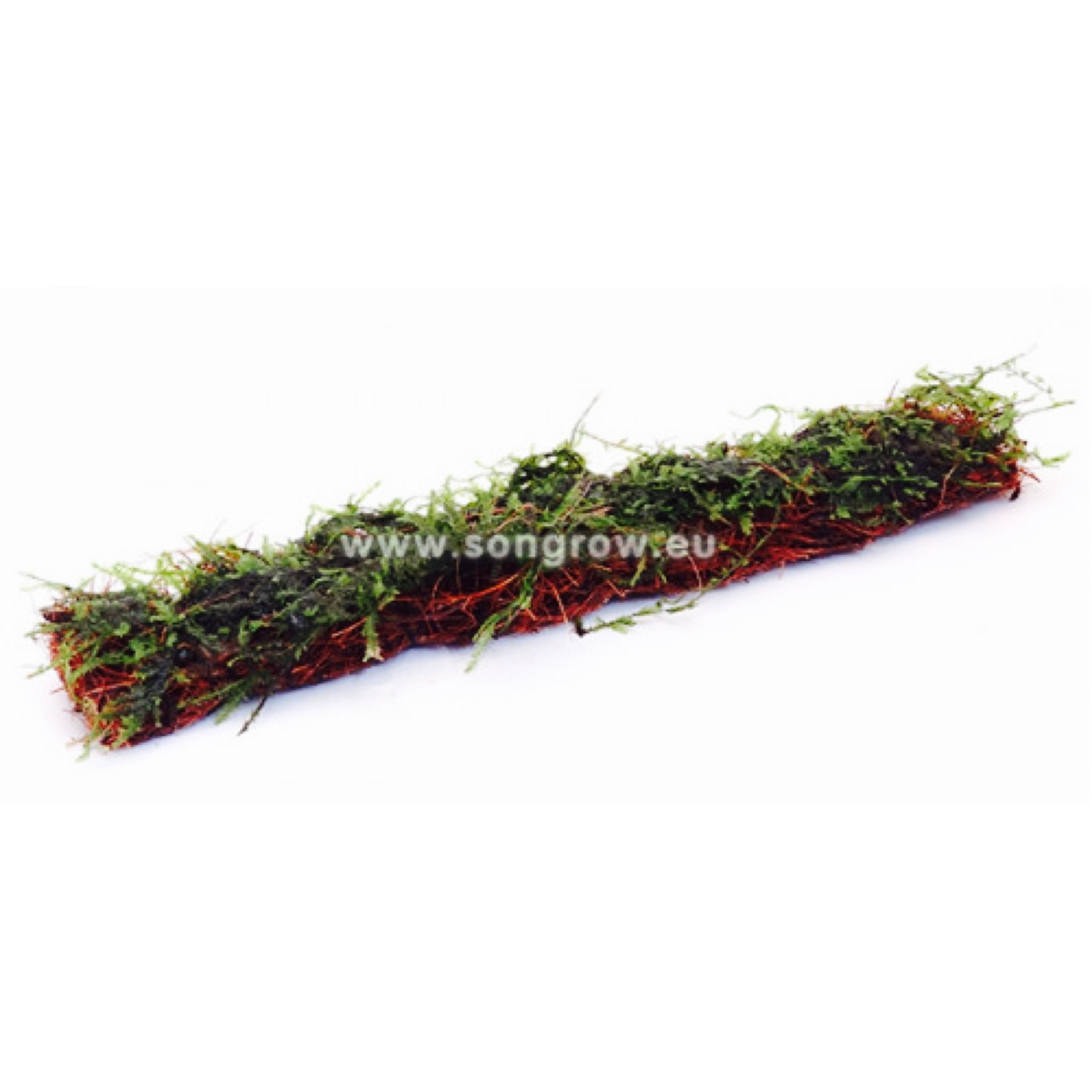 Mousse Christmas Moss tapis coco 18x3cm