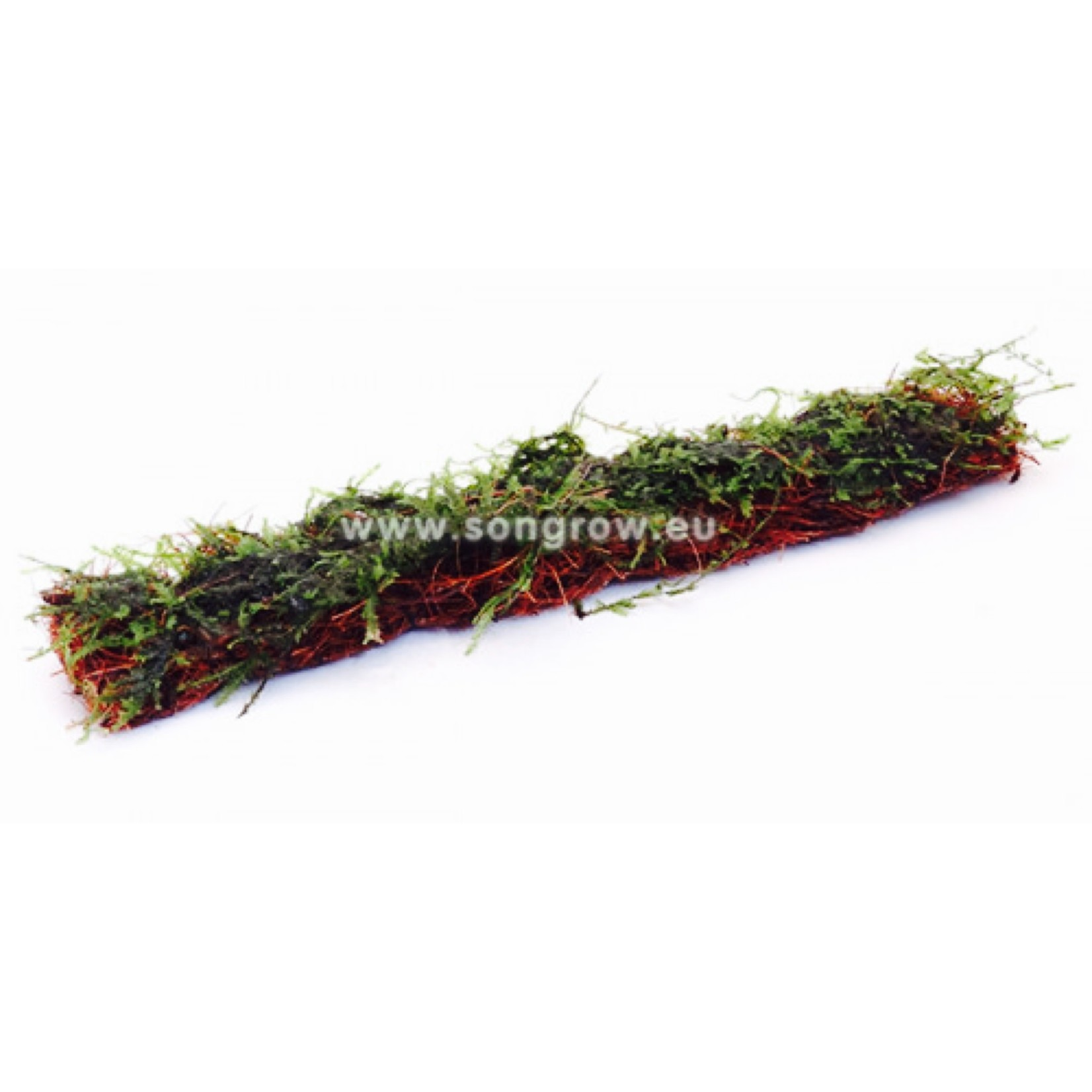 Mousse Anchor Moss tapis coco 18x3cm