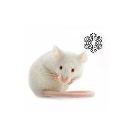 Kiezenbrink Fuzzies, Babymuis met haar (25 stuks)