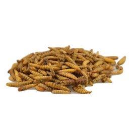 Carnis Carnis Black Soldier Fly larvae 125 gram