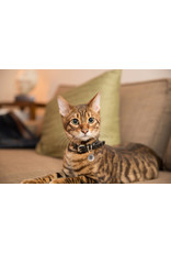 Smart Pet Tag Spotted Pro! Dog and Cat Small