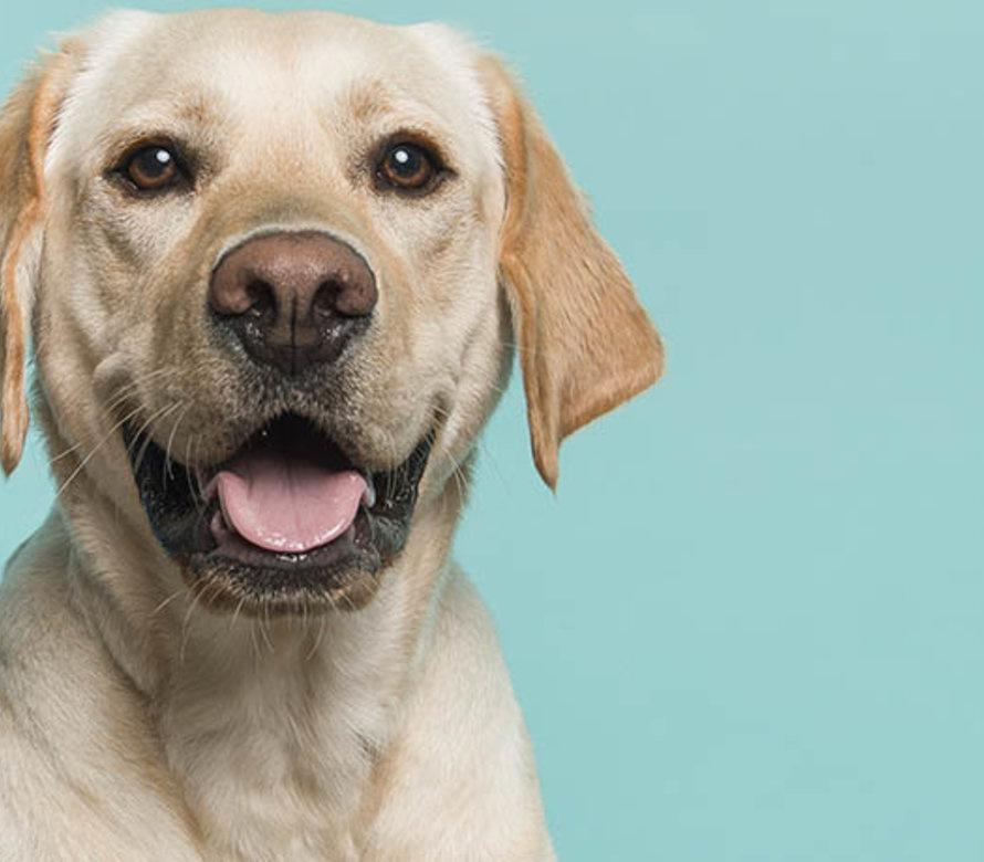 Supplement Hund