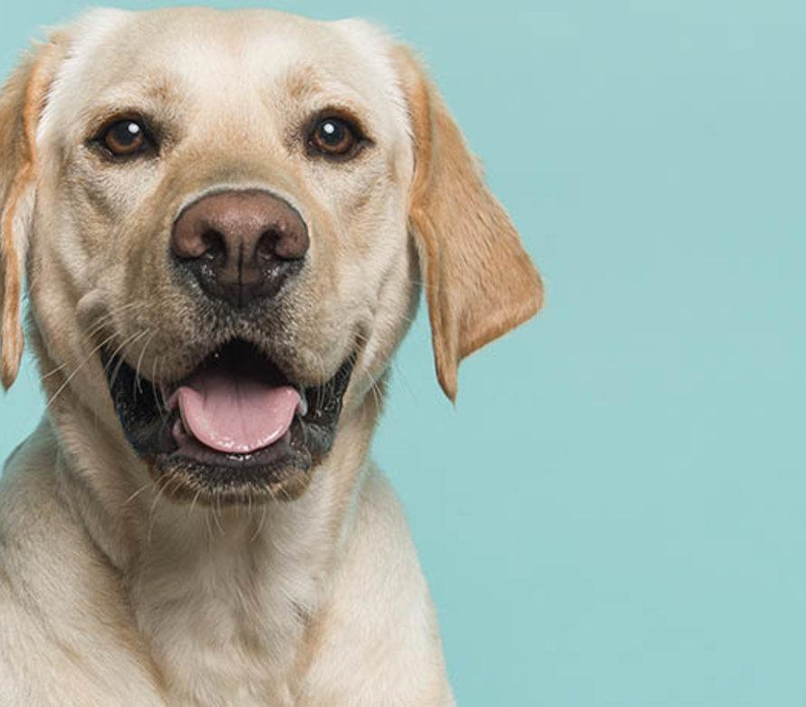 Ormepiller til hund