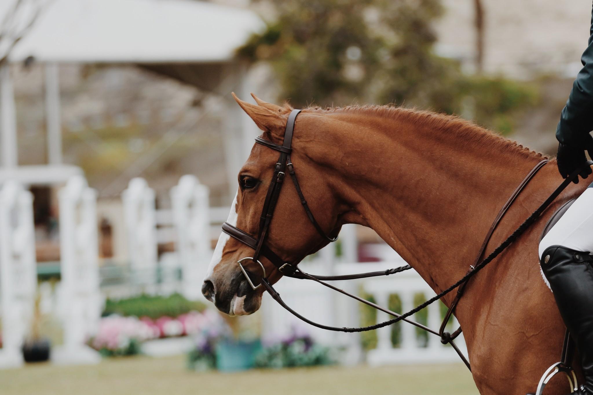 Welke olie voer ik mijn paard?