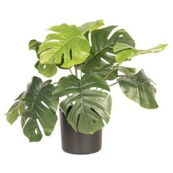 Clayre & Eef Decoratie plant Monstera Deliciosa