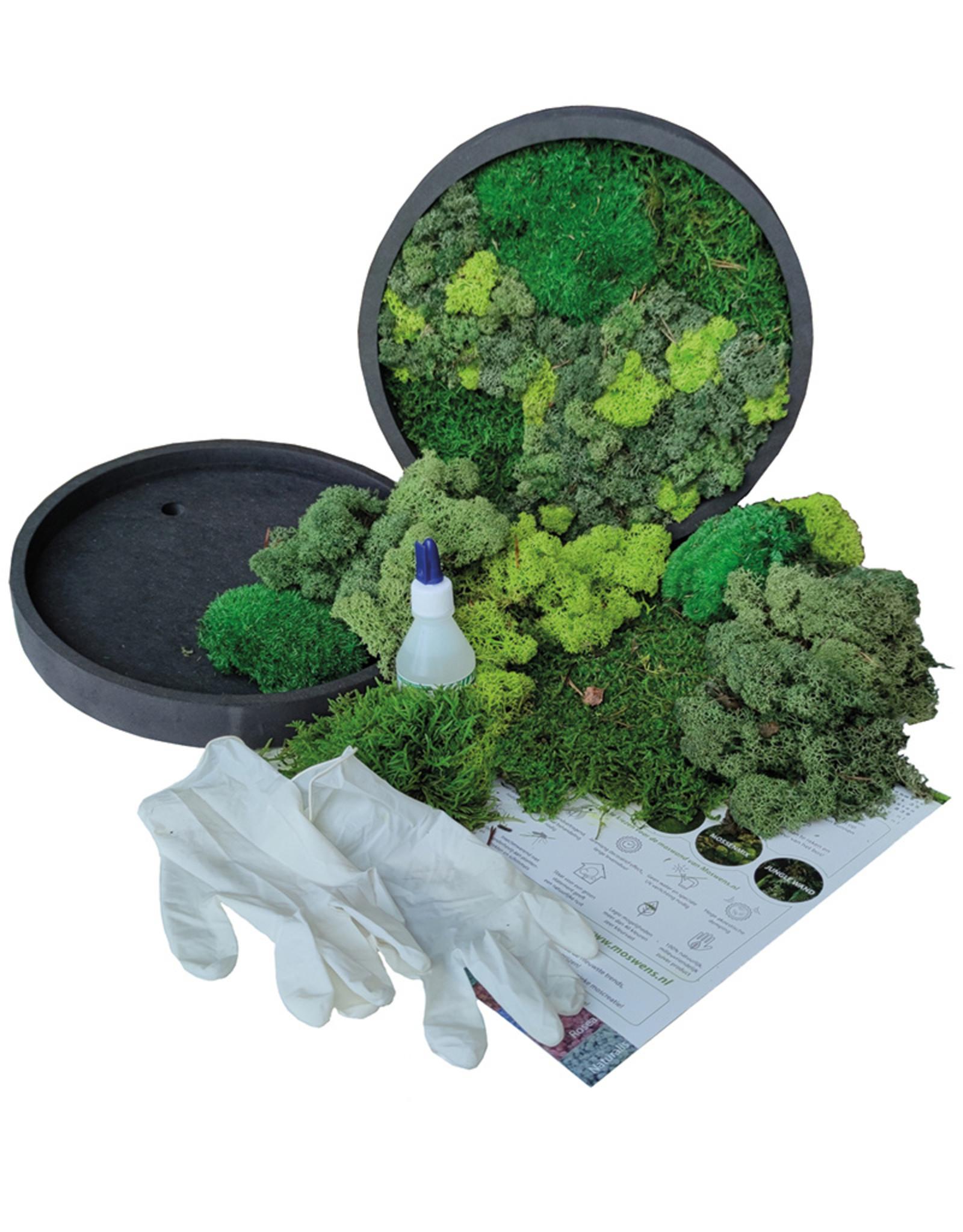Moswens [DIY] pakket met frisse groentinten