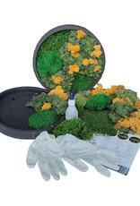 Moswens [DIY] pakket met oker geel en groentinten