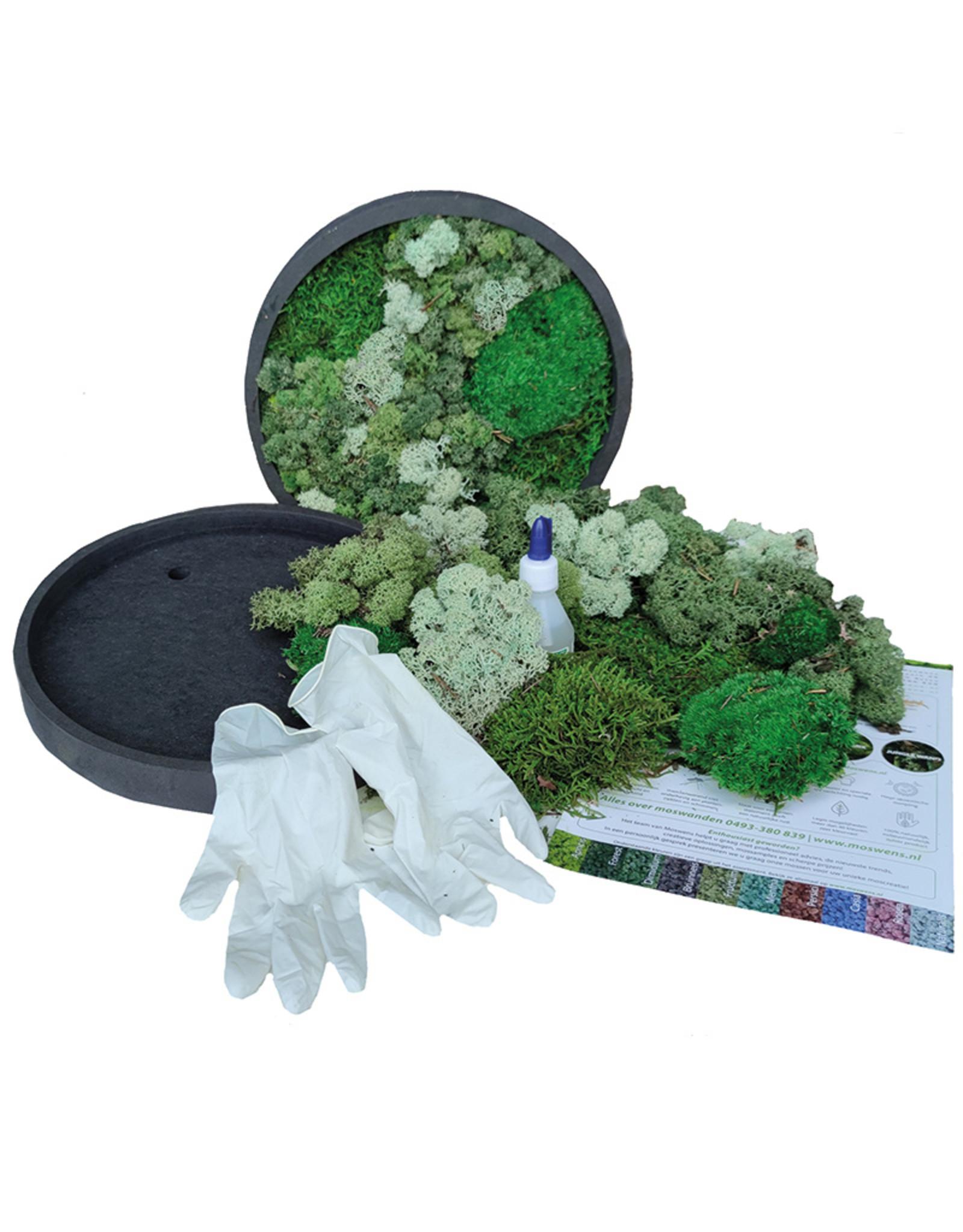 Moswens [DIY] pakket met mint kleur en groentinten