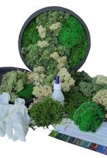 Moswens [DIY] pakket met oud/zachte groentinten