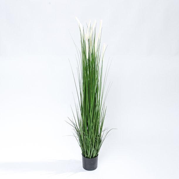Kunst Pluimgras witte pluimen 150 cm