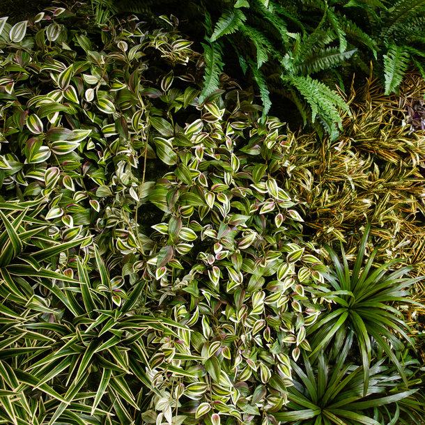Kunst Groene Wand Panel - mooie kunstplanten in een paneel