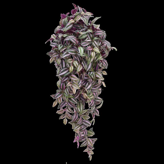 Tradescantia Tradescantia kunst hangplant 100 cm paars