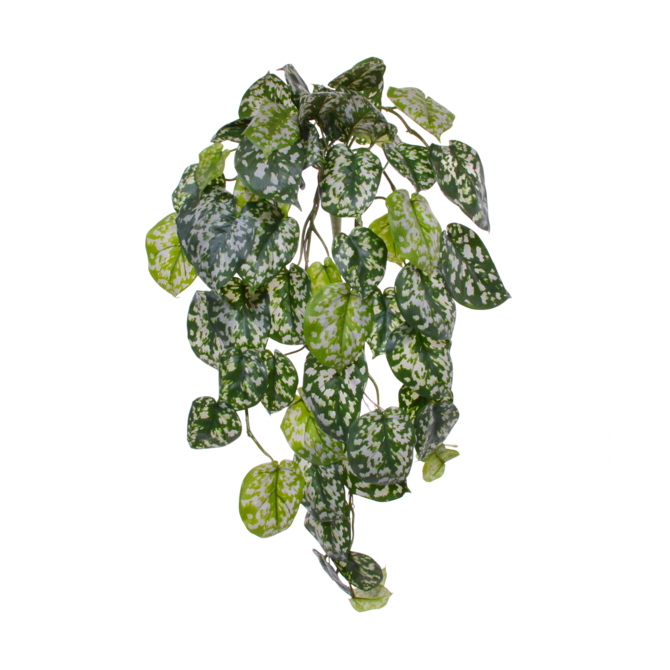 Scindapsus Scindapsus Pictus kunsthangplant 70 cm
