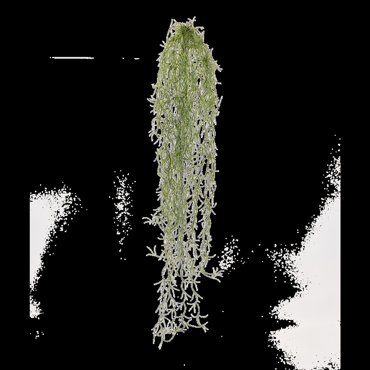 Tillandsia kunsthanger 75 cm
