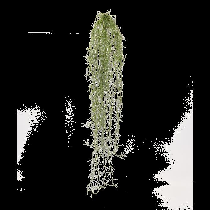Tillandsia Tillandsia kunsthanger 75 cm